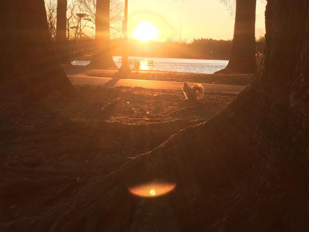 NYブルックリンで大自然を味わえる公園-7
