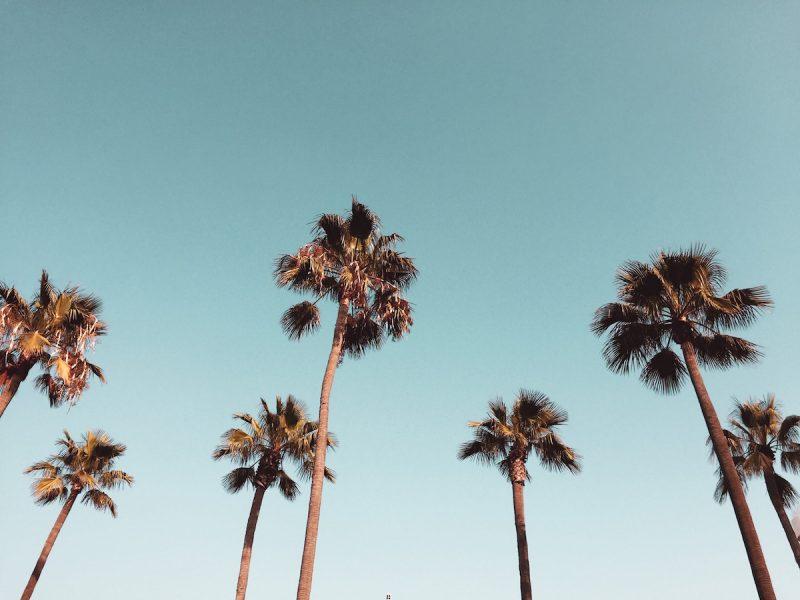 おうち時間は何してる? アラサー女子のカリフォルニア生活